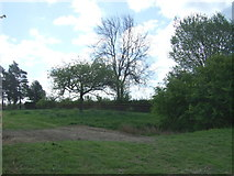 TL9159 : Grazing and pond, Bradfield St. George by JThomas