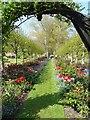 SU8403 : Rymans - Avenue of flowers by Rob Farrow