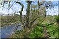 NS4223 : River Ayr Way by Richard Webb