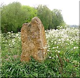 TG3204 : Old stone in cow parsley by Evelyn Simak