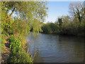 TM4091 : River Waveney near Dunburgh by Roger Jones