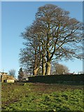 SE2648 : Trees at Banks Farm by Derek Harper