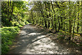 SX5258 : Plymbridge Woods by Stephen McKay