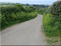 SW7856 : Hedge lined road near Treworthen Farm by Peter Wood