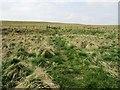 NO2305 : Path from limekilns, Lomond hills by Bill Kasman