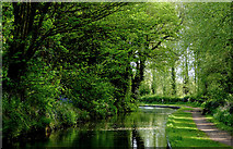SO8688 : Canal south of Greensforge Lock, Staffordshire by Roger  Kidd