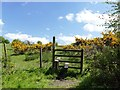 SJ9990 : Stile beside flowering gorse under a blue sky by Graham Hogg