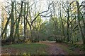 ST1738 : Rectory Wood by Derek Harper