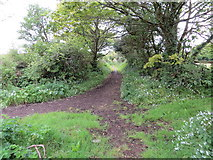 SW5530 : Track from New Road to Higher Downs by Peter Wood