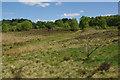 SK0112 : Hednesford Hills by Stephen McKay