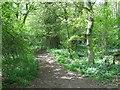 TF0916 : Dole Wood SSSI by Alex McGregor