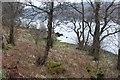 NN0319 : Wooded southeast shore of Loch Awe by Alan Reid