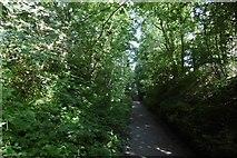 NS5574 : Ellangowan Mills Branch by Richard Webb