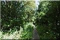 NS5085 : West Highland Way near Killearn by Richard Webb