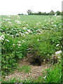 TL1628 : Burrow at the edge of a bridleway, Offley by Humphrey Bolton