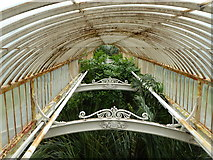 TQ1876 : Upstairs in the Palm House, Kew Gardens by pam fray