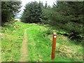 NO2004 : Path to West Feal farm, Lomond Hills by Bill Kasman