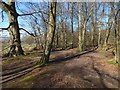 NS4472 : Path around Big Wood by Lairich Rig