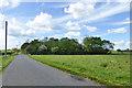 TL2446 : Woodland belt along Sutton Road by Robin Webster