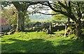 SX7476 : Emsworthy: barn and walls by Derek Harper