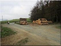 NO2103 : Stacked logs, Lomond Hills by Bill Kasman
