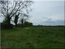 TM0099 : Farmland beside drain north of Little Ellingham by JThomas