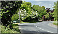 J4675 : Spring blossom, Kiltonga, Newtownards (May 2017) by Albert Bridge