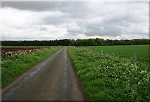 NO1706 : Woodland on Dryside Road, Lomond Hills by Bill Kasman