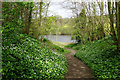 NZ0261 : Path leading down to the River Tyne by Bill Boaden