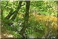 SX7353 : River Avon at Garaland Copse by Derek Harper