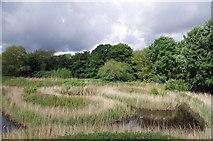 TQ4210 : Reed Bed in Lewes Railway Land LNR by Glyn Baker