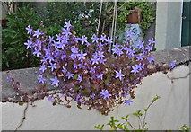 ST5772 : Garden display at Avon Crescent by Anthony O'Neil