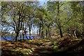 NH3301 : Track beside Loch Oich by Chris Heaton