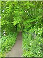 SU6086 : Thames Path near Bow Bridge by PAUL FARMER