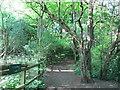 SJ9150 : Bagnall Road Wood by David Weston