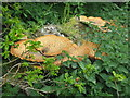 NT2470 : Sycamore log, fungus and nettles by M J Richardson