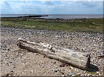 TA4115 : Tree trunk on the beach at Kilnsea by Mat Fascione