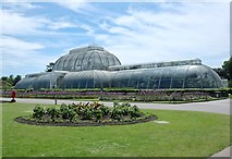 TQ1876 : Palm House by Anthony O'Neil