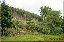 NG5536 : Raasay Forest by Anne Burgess