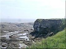 NU2231 : Kittiwake Colony at Braidcarr Rocks - Seahouses by Anthony Parkes