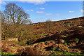 SE1441 : Bracken Hill by Mick Garratt