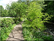 SD9927 : The riverside path, Heptonstall by Humphrey Bolton