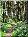 SE7647 : Allerthorpe Common woodland by Paul Harrop