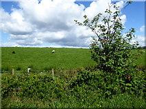 H5575 : Streefe Glebe by Kenneth  Allen