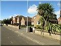 TQ1503 : Palm tree in Halsbury Road, BN11 2JP by Peter Holmes