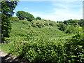 TQ5795 : Weald Country Park by Marathon