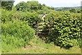 ST1996 : Overgrown stile near Pen-twyn Farm by M J Roscoe