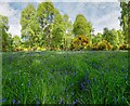 NH5143 : Croiche Wood by valenta