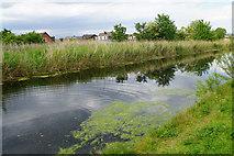 SJ5687 : The St Helens Canal by Bill Boaden