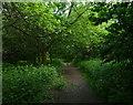 TL9097 : The Peddars Way at Gosling Plantation by Mat Fascione